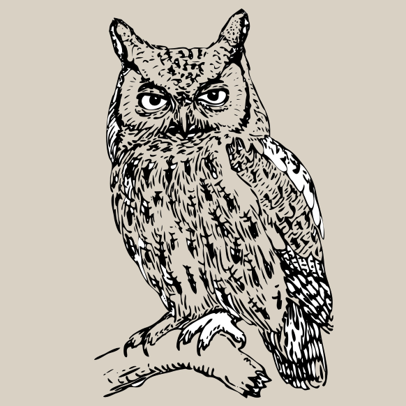 cropped-largerowl